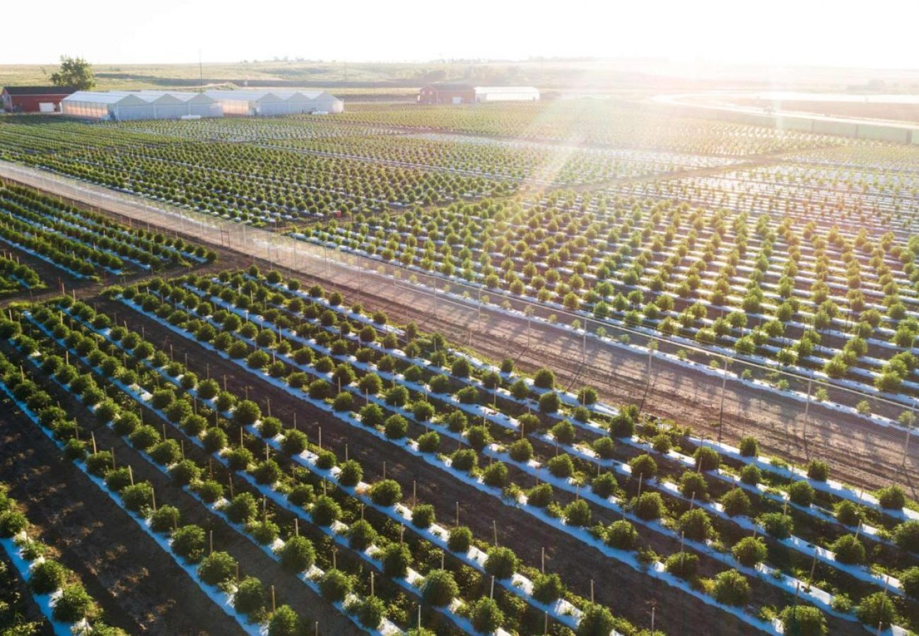 Los Suenos Farms, one of the largest cannabis grows in the world.