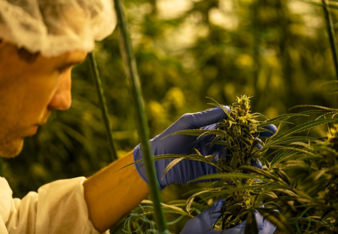 Giving Tree is vertically integrated with a grow, processing, and dispensary operation under one roof.